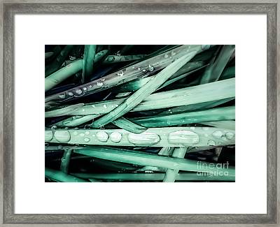 Fresh Grassy Rain Drops Framed Print by Heather Joyce Morrill