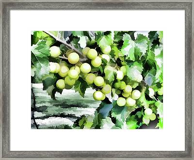 Fresh Green Grapes On Vine Framed Print by Lanjee Chee