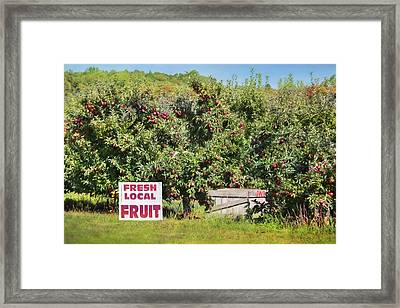 Fresh Local Fruit Framed Print by Lori Deiter