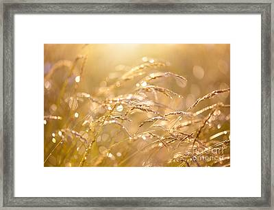 Fresh Meadow After The Rain Framed Print
