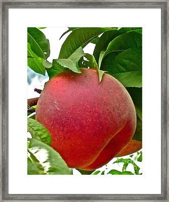 Fresh Peach Framed Print by Gwyn Newcombe