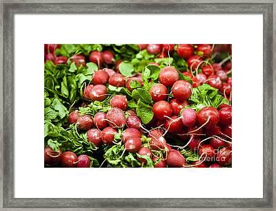 Fresh Radishes Framed Print by John Greim