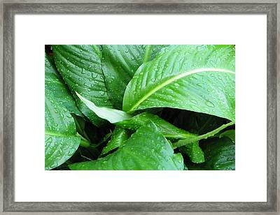 Fresh Rain Framed Print by Sheri McLeroy