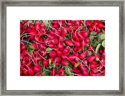 Fresh Red Radishes Framed Print by John Trax