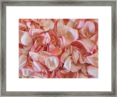 Fresh Rose Petals Framed Print