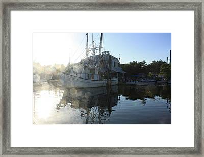 Fresh Shrimp Today Framed Print by Tara Moorman Photography