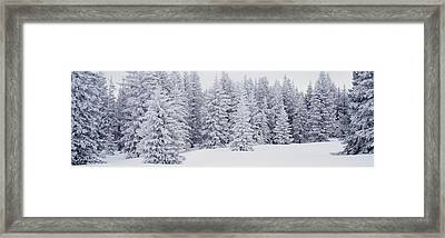 Fresh Snow On Pine Trees Taos County Nm Framed Print