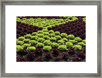 Fresh Spring Checkerboard Pattern In Lime Green And Burgundy Framed Print