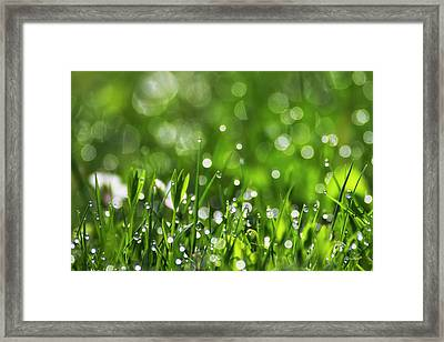 Fresh Spring Morning Dew Framed Print by Christina Rollo