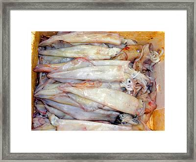 Fresh Squid On A Market Stall Framed Print