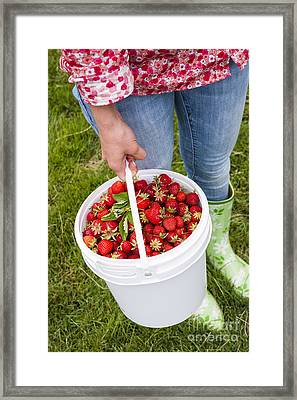 Fresh Strawberries Framed Print by Elena Elisseeva