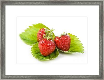 Fresh Strawberries Fruits Lying On Leaf On White  Framed Print by Arletta Cwalina