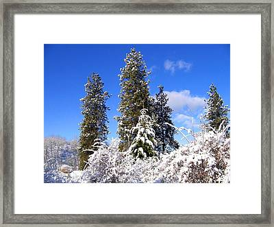 Framed Print featuring the photograph Fresh Winter Solitude by Will Borden
