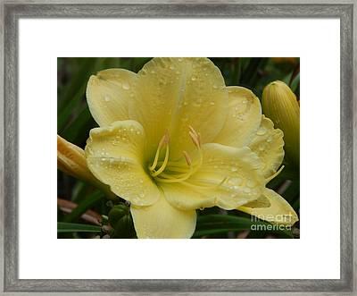 Fresh Yellow Framed Print