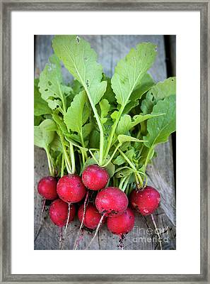 Framed Print featuring the photograph Freshly Picked Radishes by Elena Elisseeva