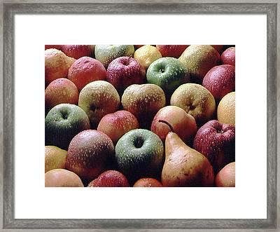 Freshly Picked Framed Print by Steven Huszar