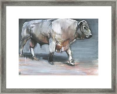 Fresno   Galloway Bull Framed Print by Mark Adlington