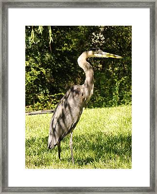 Friday Visitor-heron Framed Print