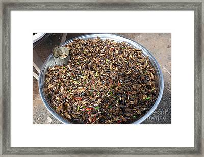 Fried Grasshoppers Framed Print by Massimo Lama