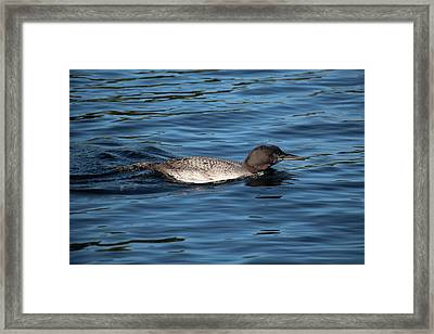 Friend Of The Lake. Framed Print