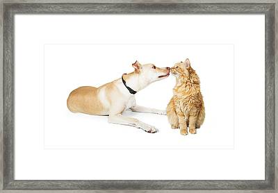 Friendly Dog And Cat Sniffing Each Other Framed Print