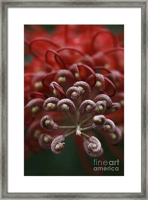 Framed Print featuring the photograph Friendly Foe by Stephen Mitchell