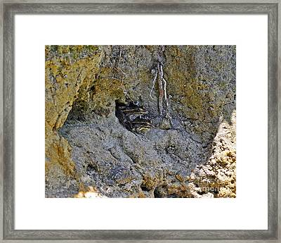 Friendly Frogs Framed Print by Al Powell Photography USA