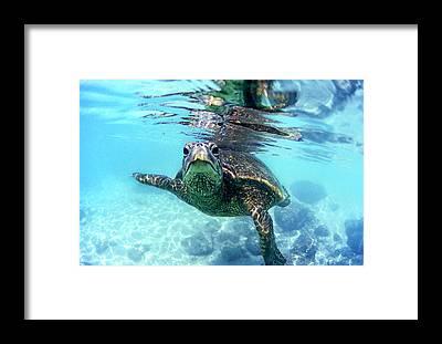 Sea Turtle Framed Prints