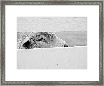Friendly Sheep Framed Print
