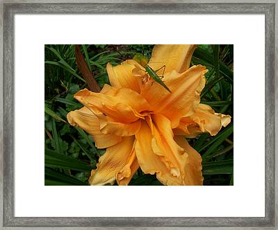 Framed Print featuring the photograph Friendly Visitor by Sandy Collier