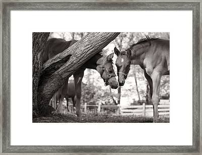 Friends - Black And White Framed Print by Angela Rath