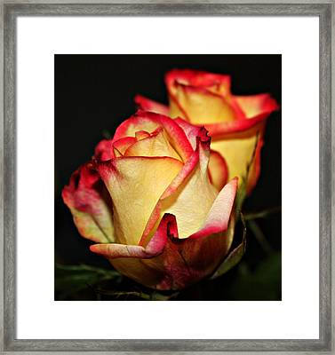 Friends In Bloom Framed Print by Cathie Tyler