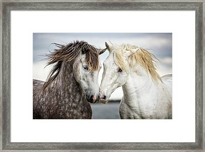 Friends Iv - Colour Framed Print by Tim Booth