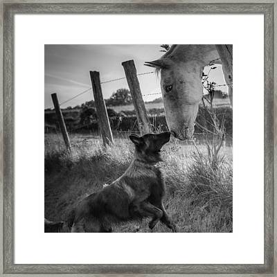 Friend's Kiss ;-) Framed Print by Christophe