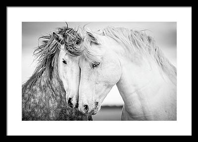White Horse Framed Prints