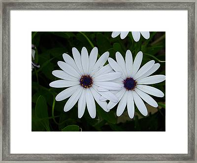 Friendship Framed Print by Edan Chapman