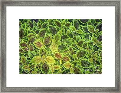 Friendship Plant Framed Print