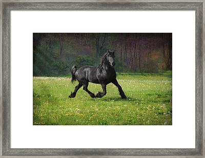 Friesian Power Framed Print by Fran J Scott