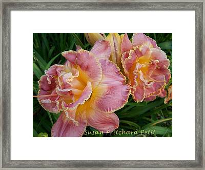 Frills Framed Print by Sandy Collier