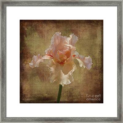 Frilly Iris Framed Print