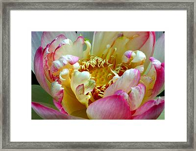 Frilly Lotus Framed Print by Annie Johnson