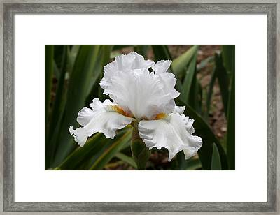Frilly White Iris Flower Framed Print