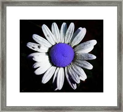 Fringe - Blue Flower Framed Print by Bill Cannon