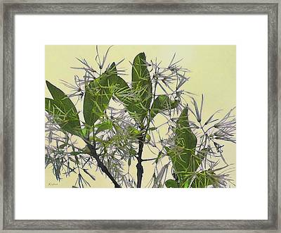 Fringe Tree Framed Print