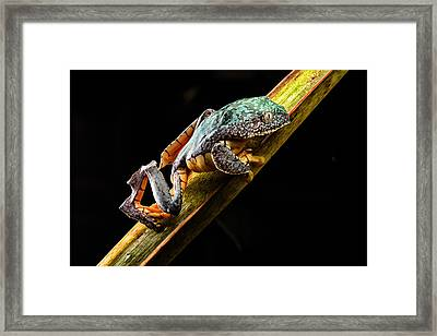 Fringe Tree Frog - Amazon Rain Forest Framed Print by Dirk Ercken
