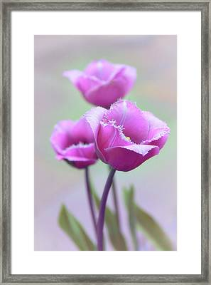Framed Print featuring the photograph Fringe Tulips by Jessica Jenney