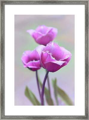 Fringe Tulips Framed Print
