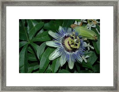Fringed Color Framed Print