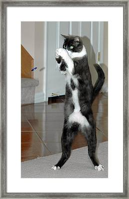 Frisbee Cat Framed Print