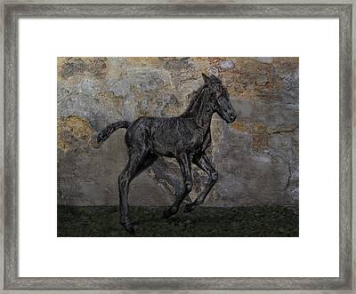 Frisian-boy Framed Print